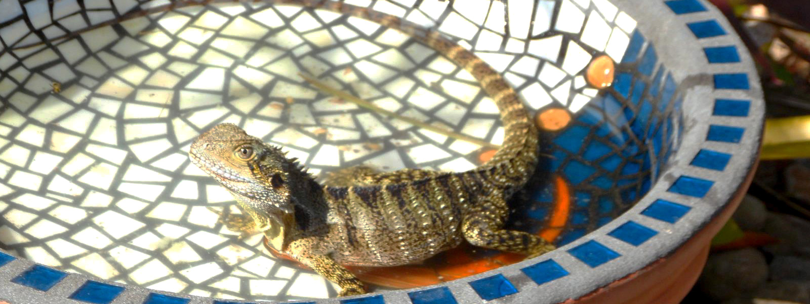 Create a Lizard Friendly Garden
